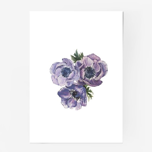 Постер «цветы Анемоны»