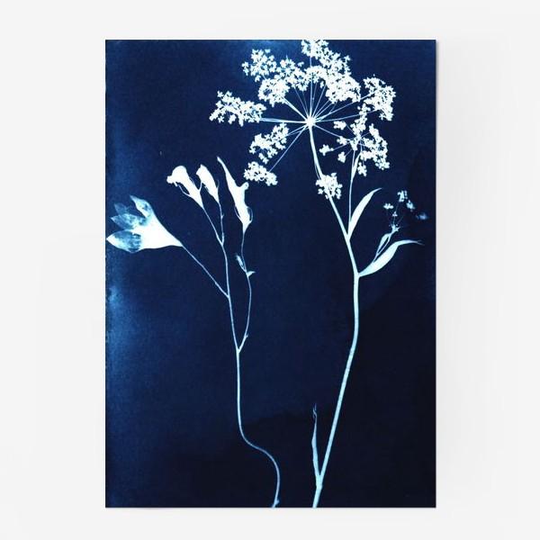 Постер «Сухие цветы »