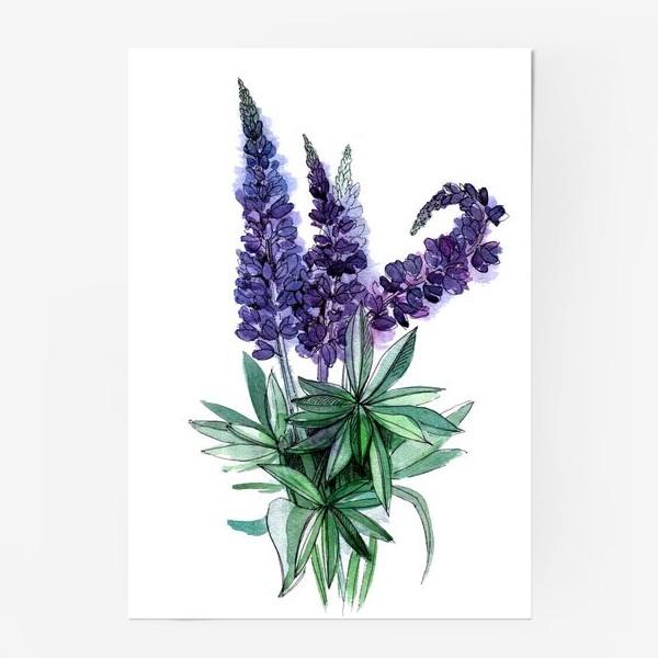 Постер «Люпины, полевые цветы акварелью»