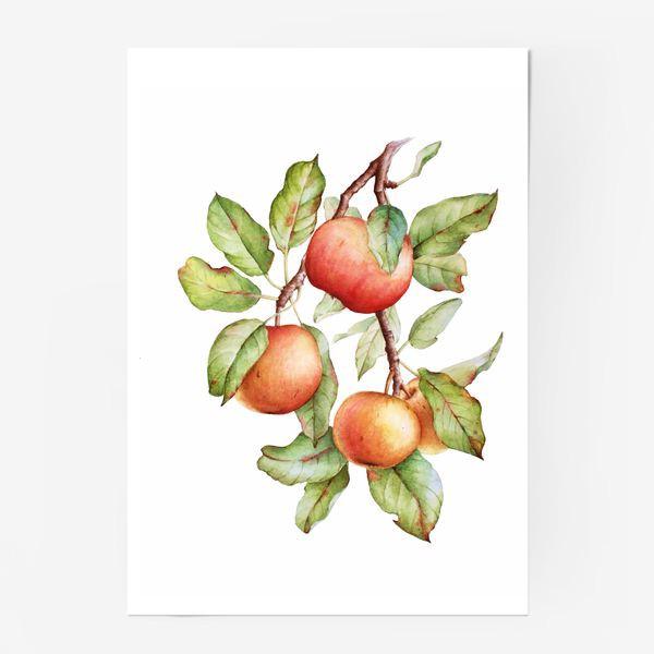 Постер «Ветка яблони»