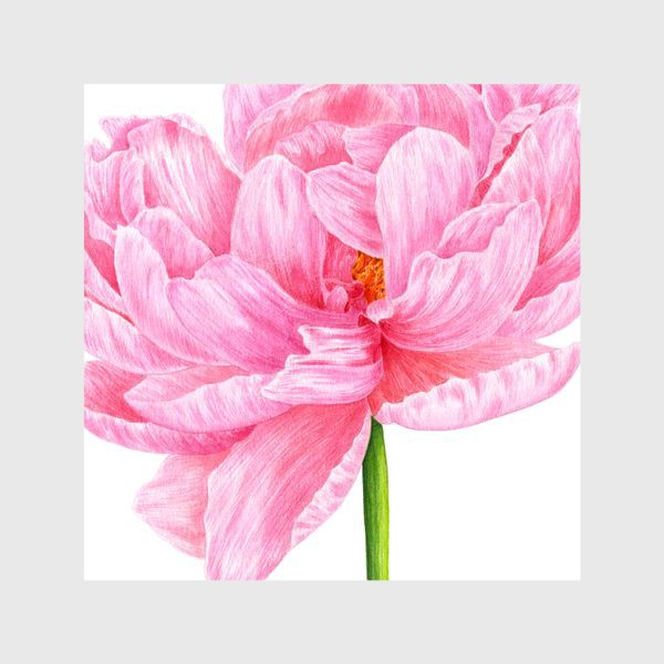 Шторы «Розовый пион»