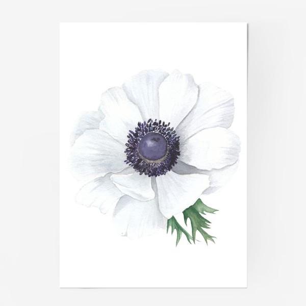 Постер «Белый анемон»