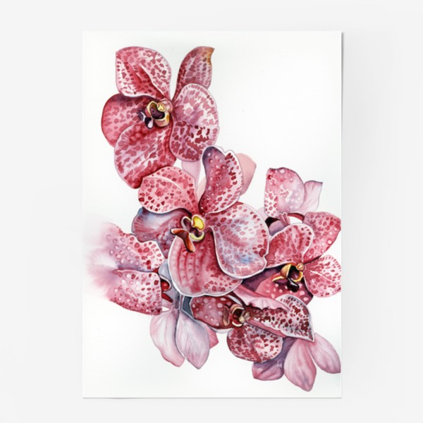 Постер «орхидейка красная»