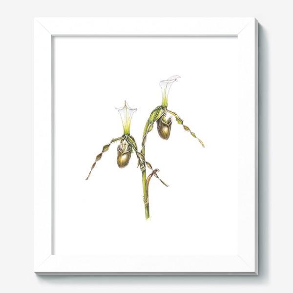 Картина «Венерин башмачок орхидея»