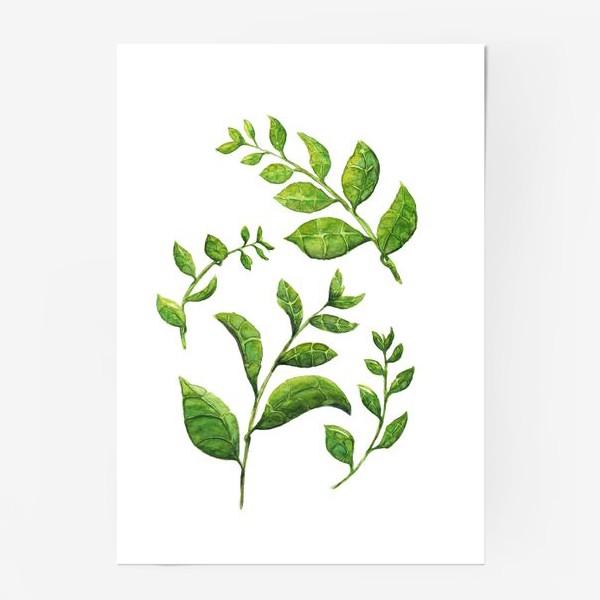 Постер «Акварельные зеленые веточки»