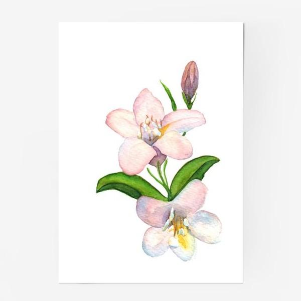 Постер «Акварельные Розовые цветы»