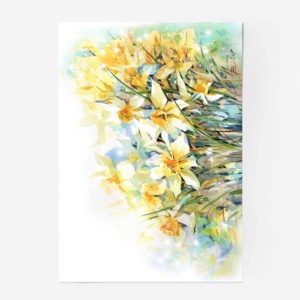 Постер «Нарциссы жёлтые»