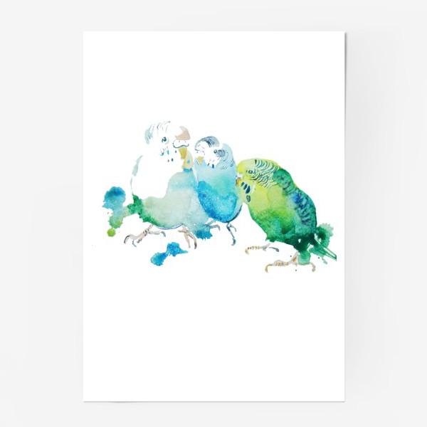 Постер «sweety parraket»