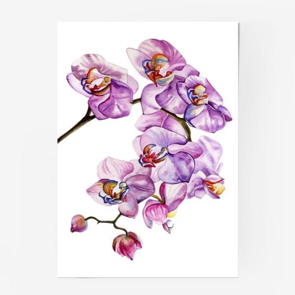 Постер «орхидейка»