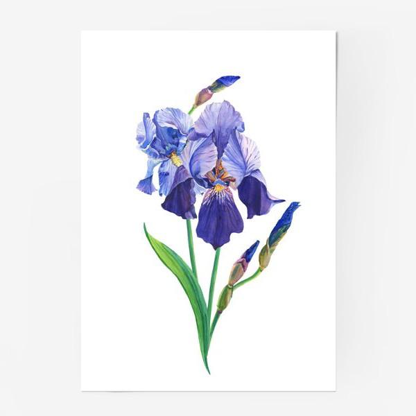 Постер «Фиолетовые ирисы.»