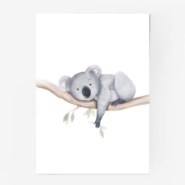 Постер «коала»