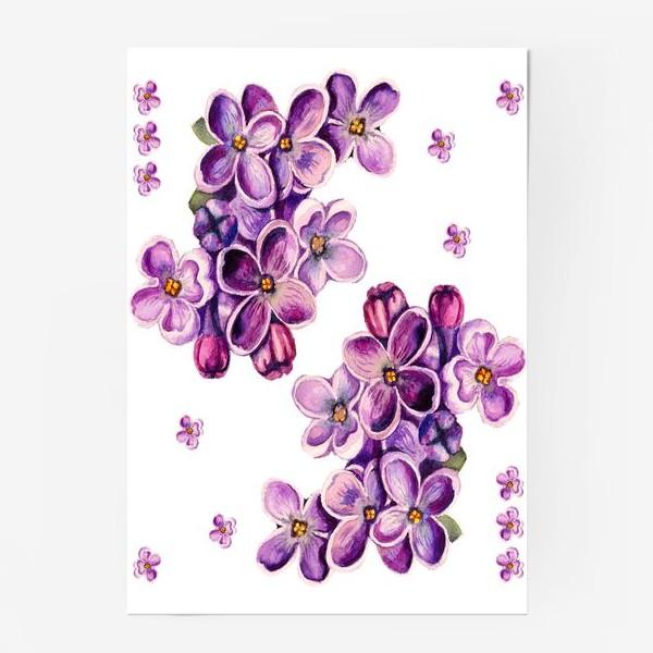 Постер «Цветы сирени»