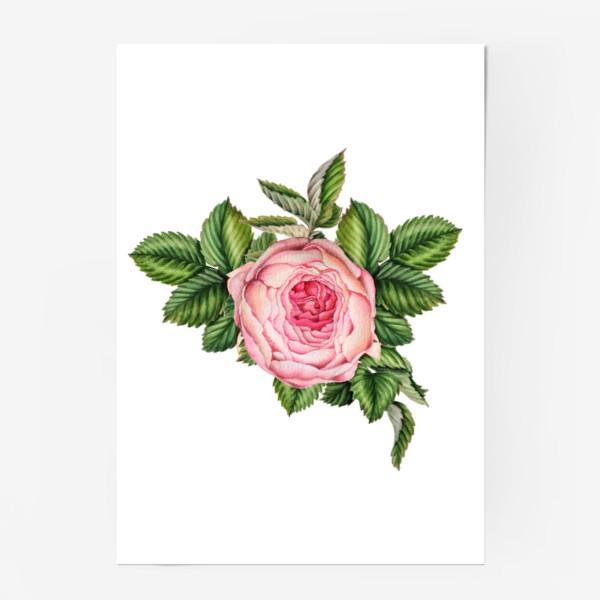 Постер «Розовая роза»