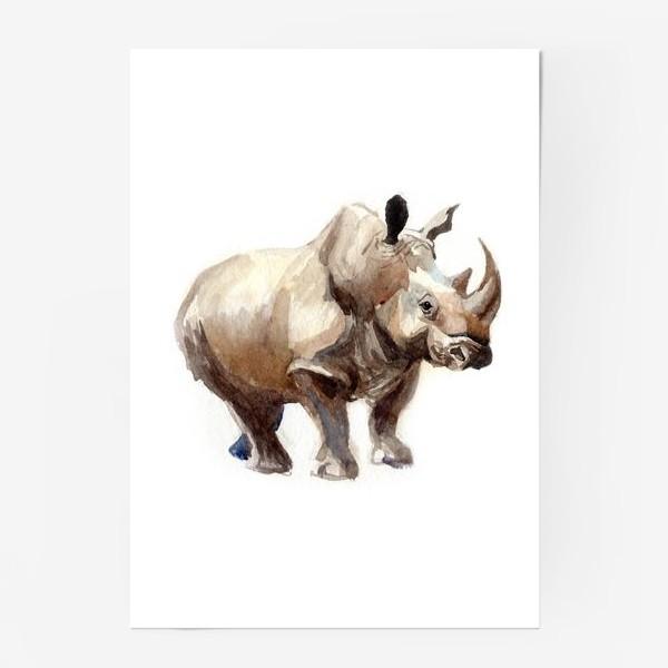 Постер «Носорог»