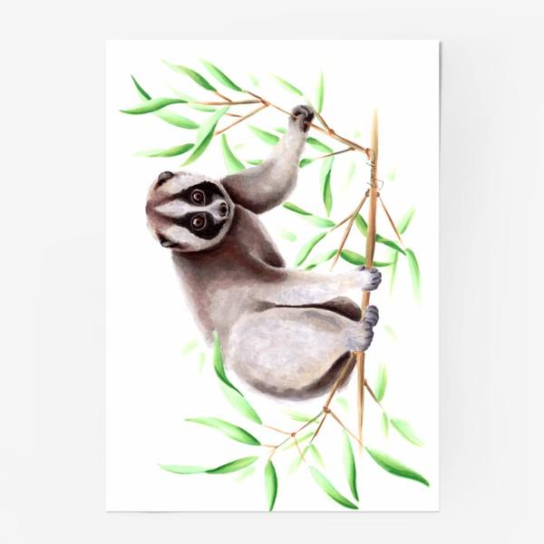 Постер «Лемур Лори»
