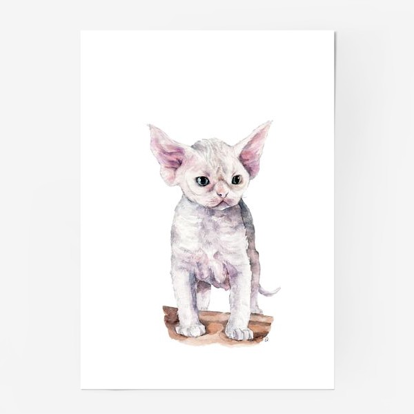 Постер «белый котенок девонрекс»