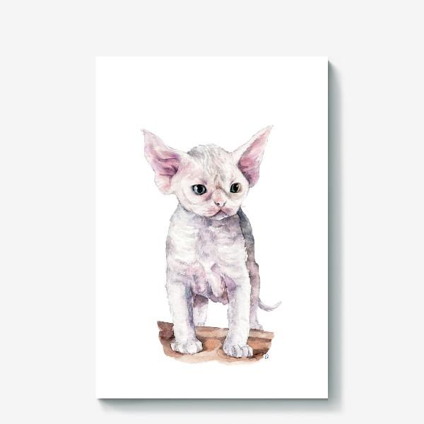 Холст «белый котенок девонрекс»