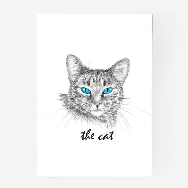 Постер «Кот. Голубые глазки.»