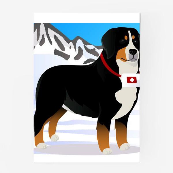 Постер «Бернский Зенненхунд спасатель»