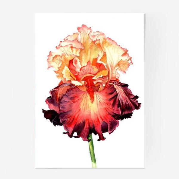 Постер «Красный ирис»