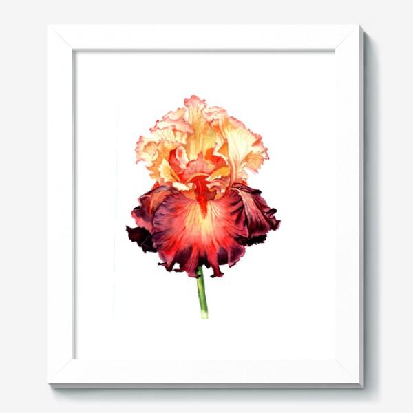 Картина «Красный ирис»