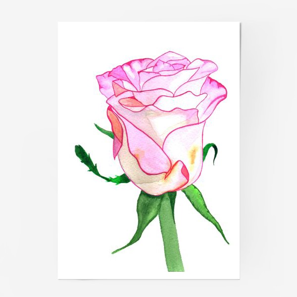Постер «Роза »