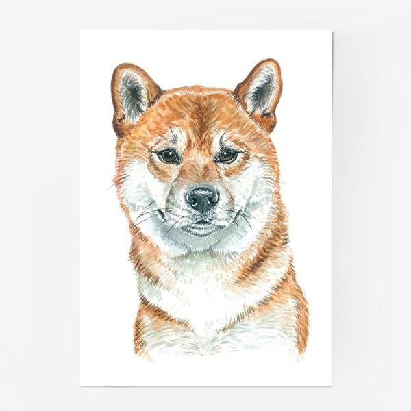 Постер «пес Шиба Ину »