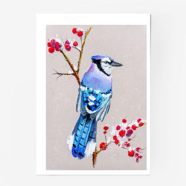 Постер «Голубая сойка»