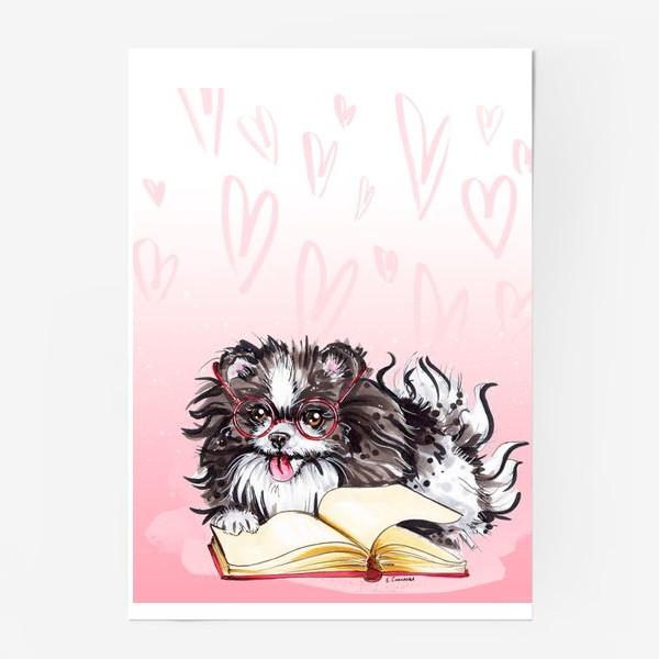 Постер «Умный пес - шпиц»
