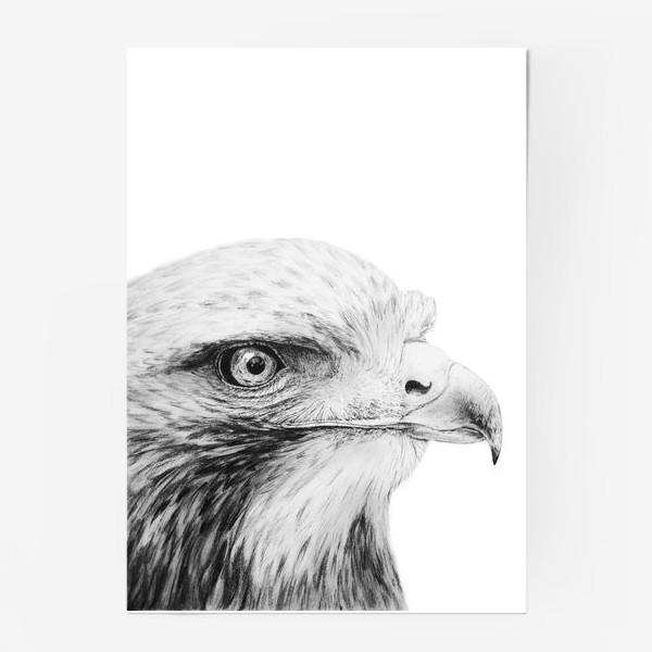 Постер «Орел - гордая и красивая птица!»