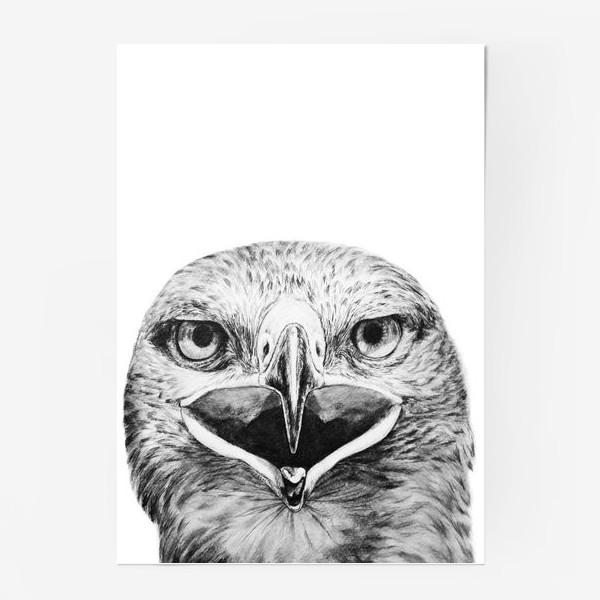 """Постер «Принт """" Хищная птица Орел""""»"""