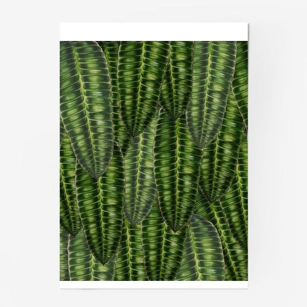 """Постер «Ботаника """" Темно-зеленые листья""""»"""