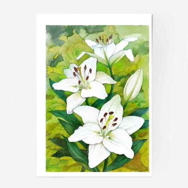 Постер «Белые лилии. Акварель»