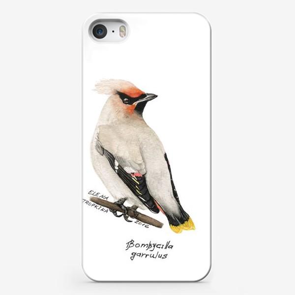 Чехол iPhone «Свиристель»