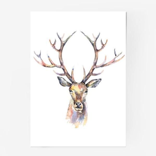 Постер «Голова оленя. Акварель»