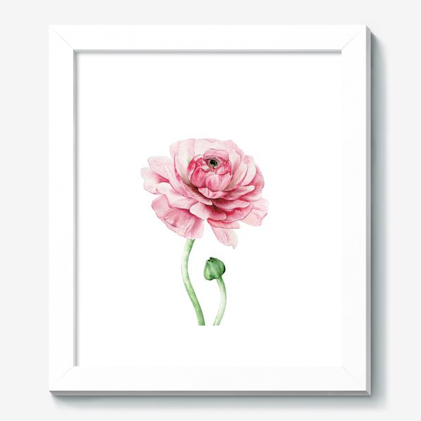 Картина «Розовый ранункулюс »