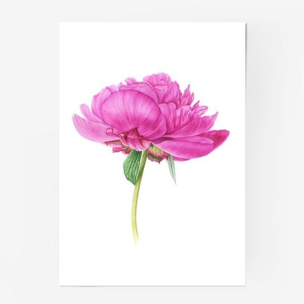 Постер «Яркий розовый пион»