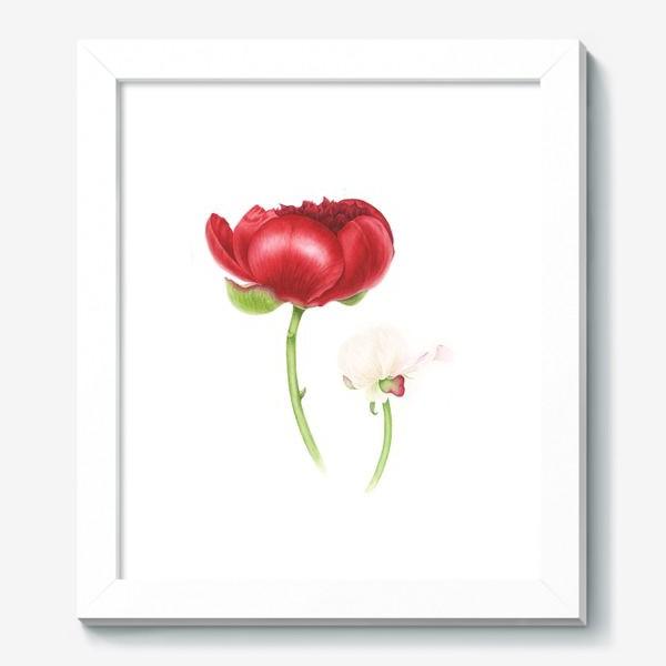 Картина «Красный и белый пионы»