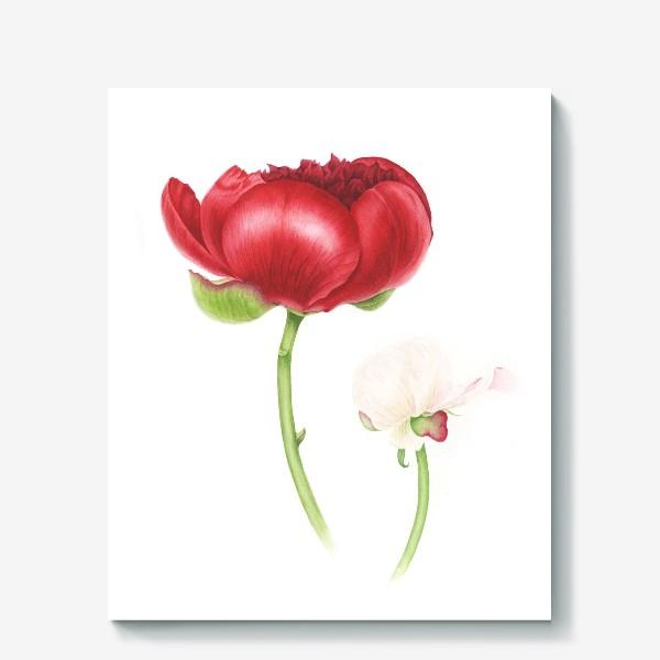 Холст «Красный и белый пионы»