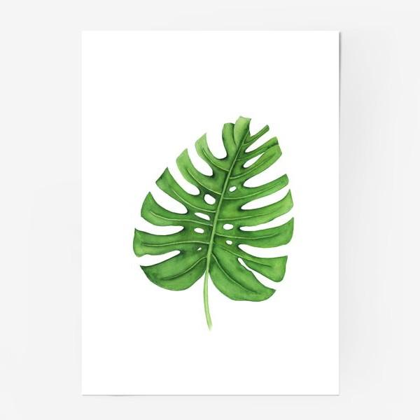 Постер «Тропики. Лист монстеры на белом фоне»