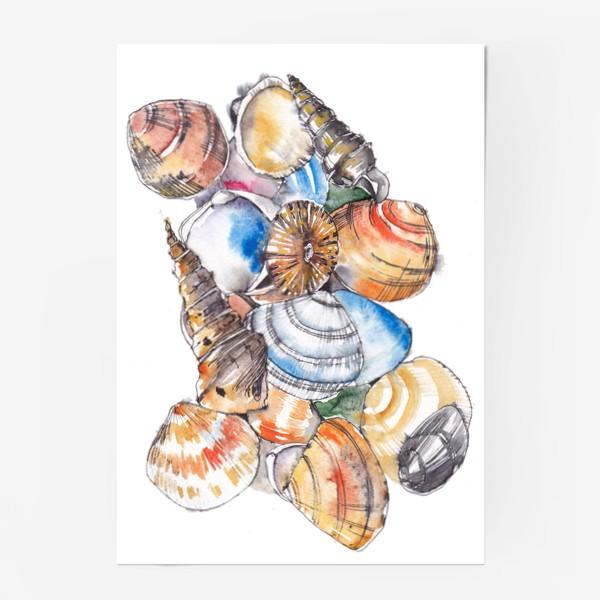 Постер «Морские ракушки»