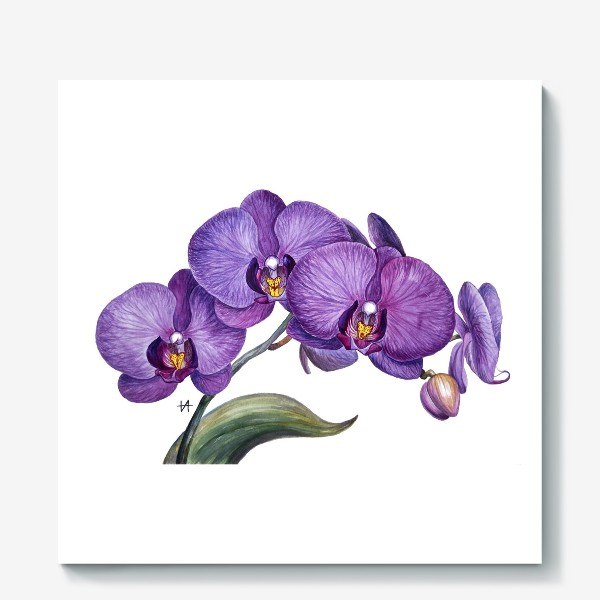 Холст «Ветка орхидеи»
