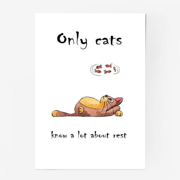 Постер «Кот на отдыхе»