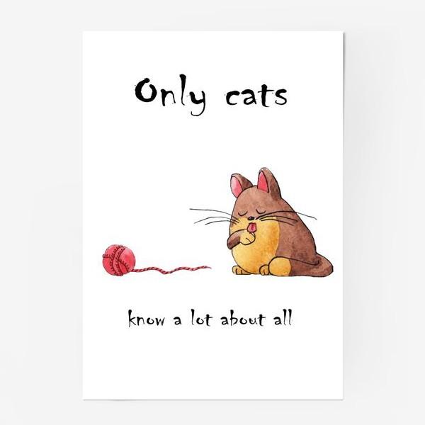 Постер «Кот и философия жизни»