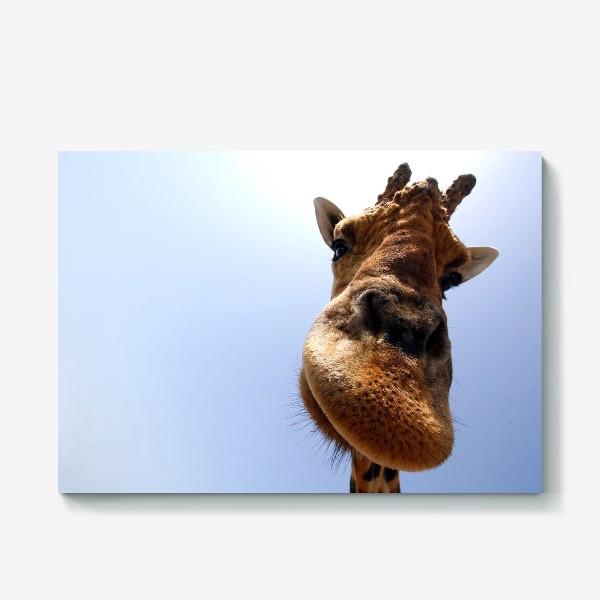Холст «Жираф 2»