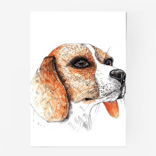 Постер «Собака Бигль Рисунок»