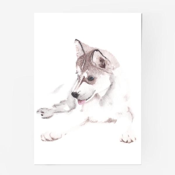 Постер «Щенок Хаски»