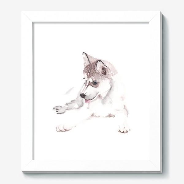Картина «Щенок Хаски»