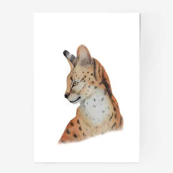 "Постер «Дикая кошка ""Сервал""»"