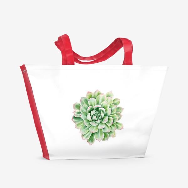 Пляжная сумка «Акварельный суккулент »